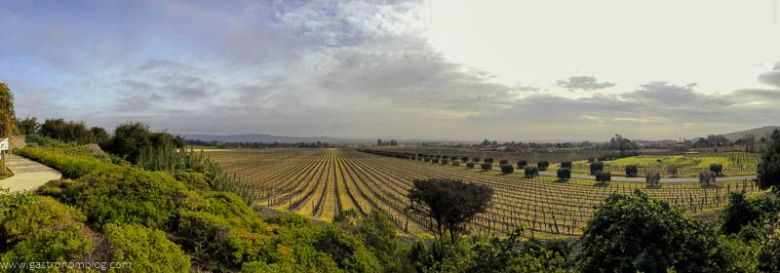 The view from the tasting terrace at Gloria Ferrer Caves and Vineyards in Sonoma Valley.