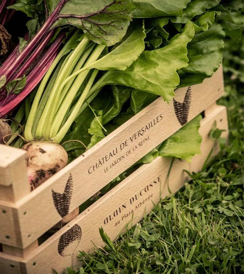 Les légumes du Jardin de la Reine du château de Versailles
