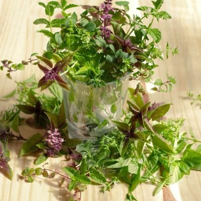 Cómo conservar hierbas frescas