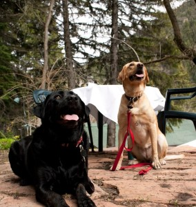 dogs on the log haven patio