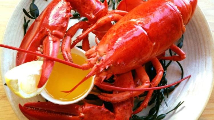 Blind Dog - lobster
