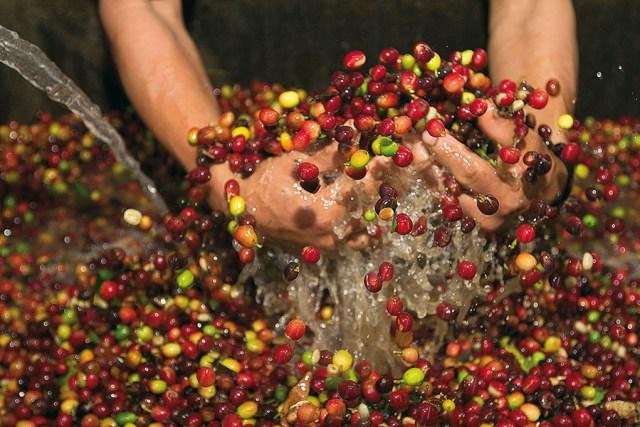 Jacobs Barista Team Kaffe aus Peru