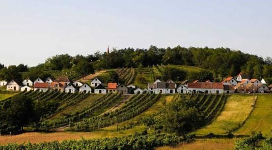 Wein Kochbuch Winzer