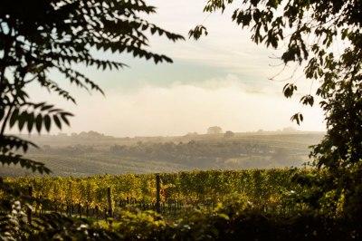 Bio-Wein und Bio-Weinbau aus Österreich Geyerhof