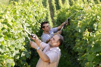 Wein Klosterneuburg Weingut Kerbl Vater Sohn