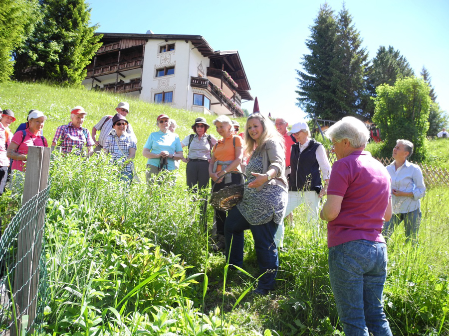 Südtiroler Naturschätze: Alpenkräuter neu entdecken