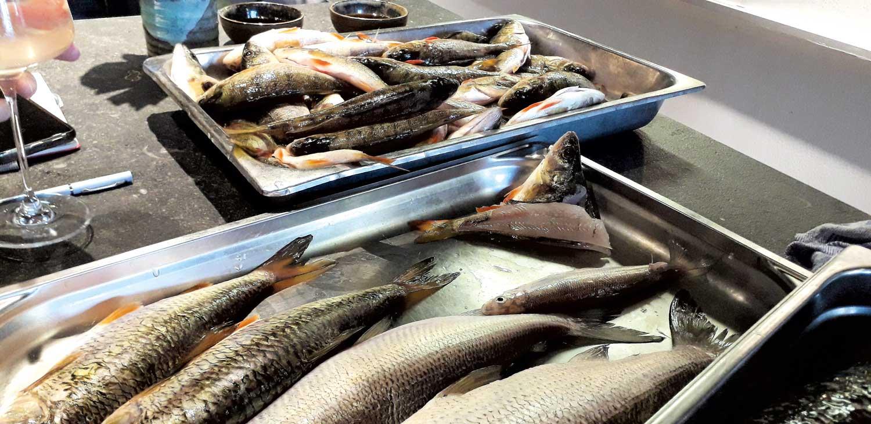 Lukas Nagl verarbeitet generell den gesamten Fang der Traunseefischer.