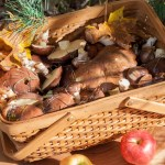 Bolete Mushroom Foraging and Zhulien