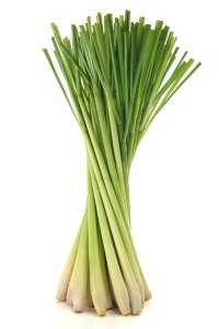 Lemongrass Cymbopogon flexuosus