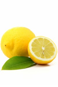 Lemon Citrus limon