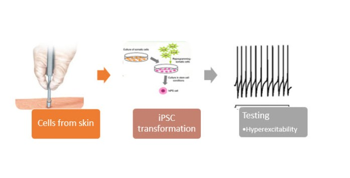 lithium mechanism of action studies