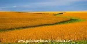 Uruguayan Farm Land