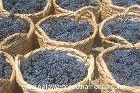 grapes mendoza