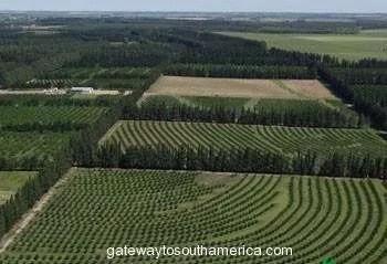 Citrus Uruguay