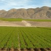 image of a Chilean Vineyard