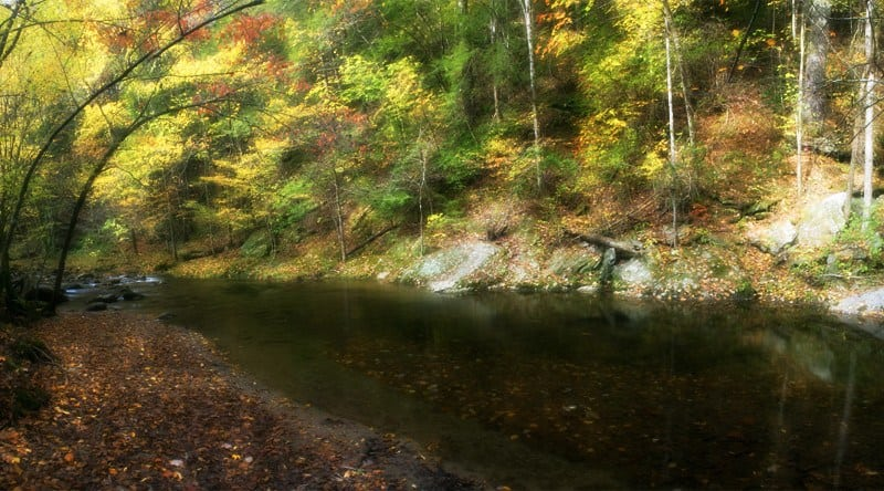 Gatlinburg Fall Colors Forecast and Foliage Report for