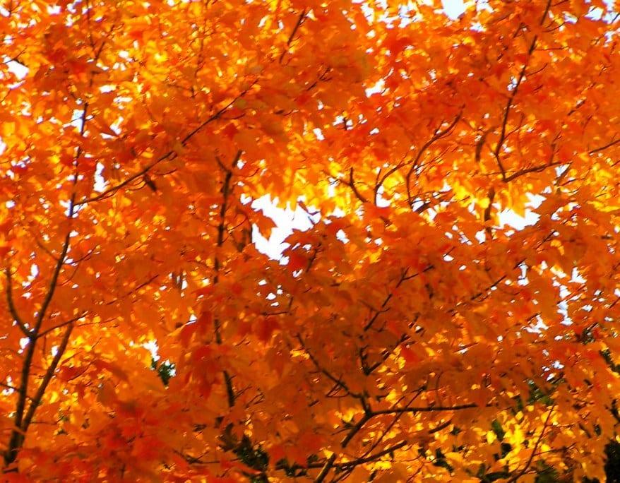 Gatlinburg In The Fall Wallpaper Gatlinburg Fall Colors Forecast And Foliage Report 2018