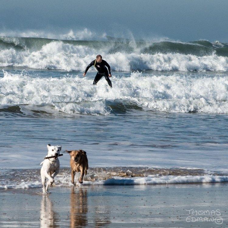 Dogs Lisboa