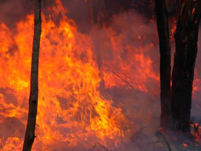 Hasta el 96% de los incendios tienen detrás al hombre. Autor: bertknot