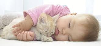 Bebé con gatito
