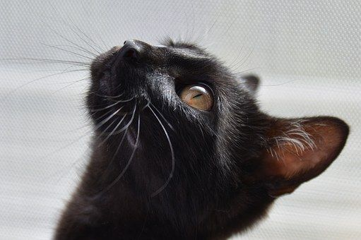 cat-1507603__340
