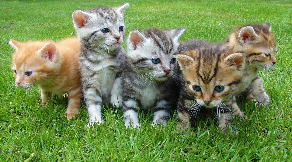 Cura Post Natale Di Un Gatto E Dei Suoi Cuccioli Appena Nati Gatto