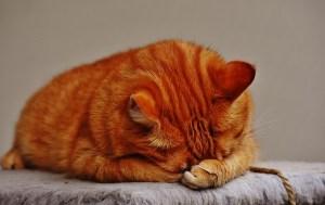 mantello-gatto