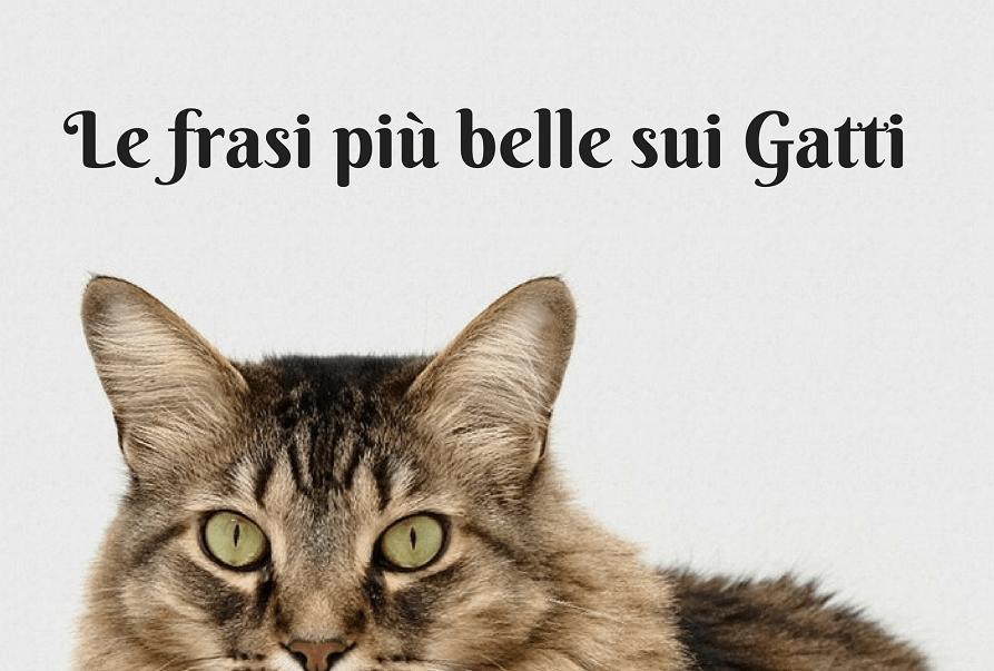 Le Migliori Frasi Sui Gatti Quali Sono Le Tue Preferite Gatto Blog