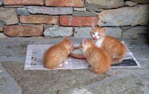 lette gattini
