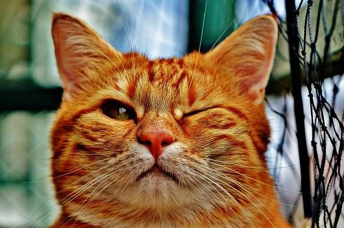 gatto-occhiolino