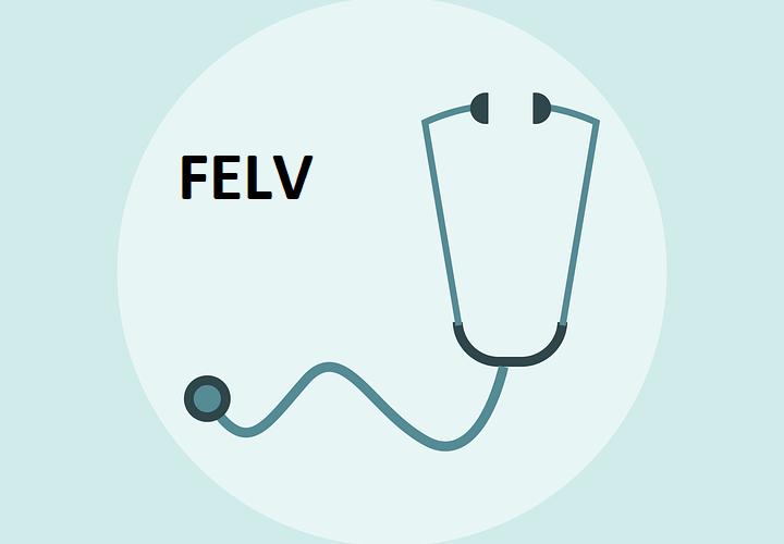 Felv o leucemia felina: sintomi, cure e prevenzione