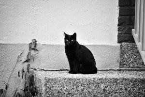 bombay gatto foto 3