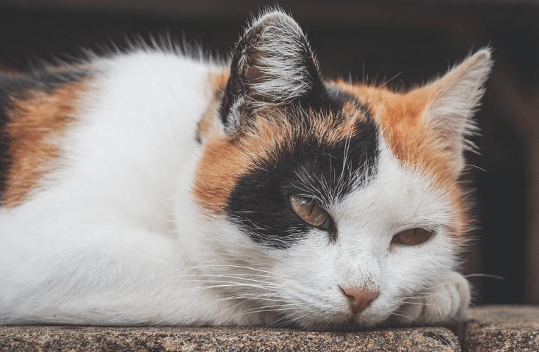 Avvelenamento da mercurio nei gatti