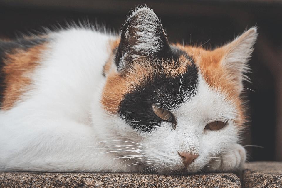 gatto-mercurio-foto