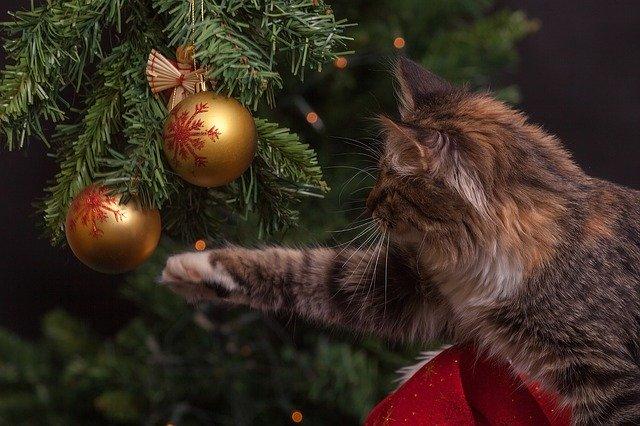 13 passaggi per evitare una catastrofe sull'albero di Natale!
