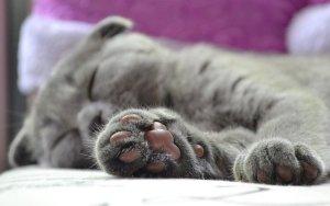 zampa gatto