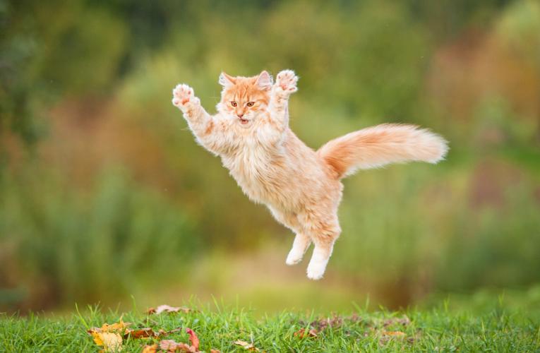 Addestrare un gatto è possibile!