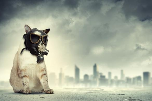 flatulenza nei gatti