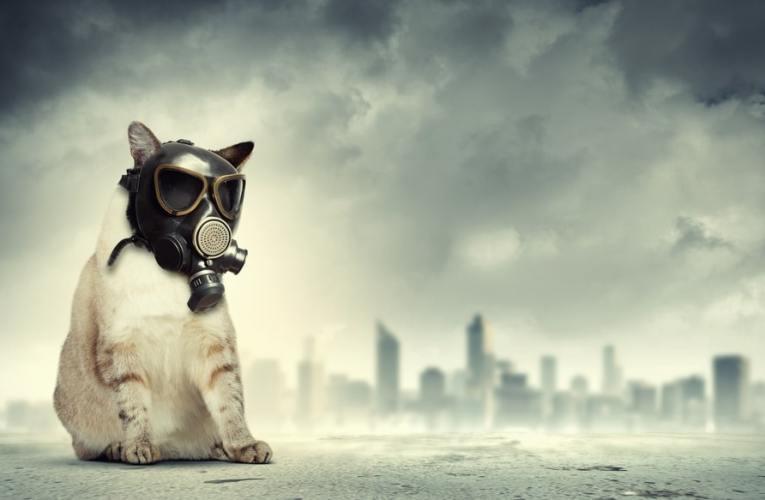 Flatulenza (Gas) nei gatti: Cause e rimedi
