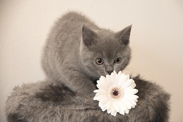 Trattamenti naturali e rimedi alle erbe per animali domestici