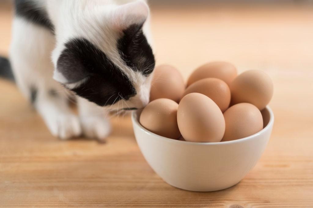 gatto e uova