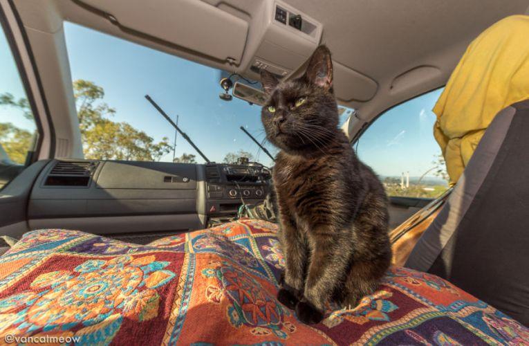 Una coppia gira il mondo in compagnia del loro gatto