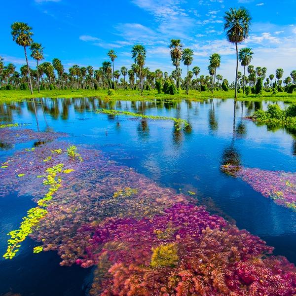 Bañado La Estrella argentina 7 meraviglie naturali