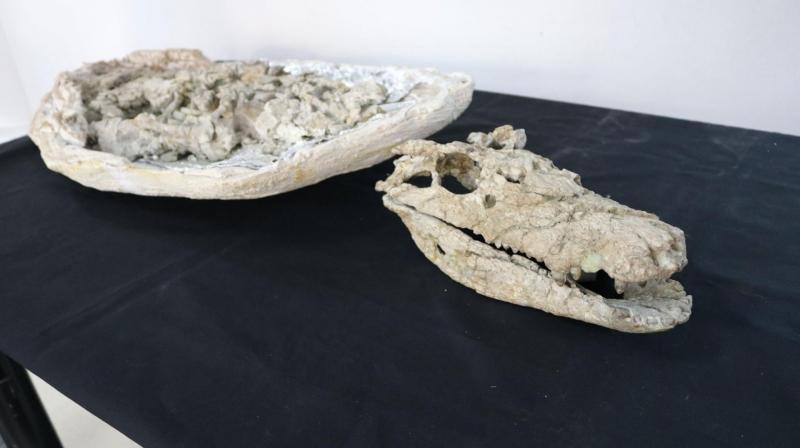 argentina coccodrillo Barrosasuchus Neuquenianus