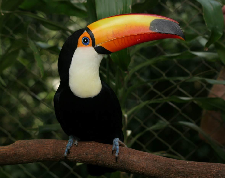 selva misionera argentina 7 meraviglie naturali