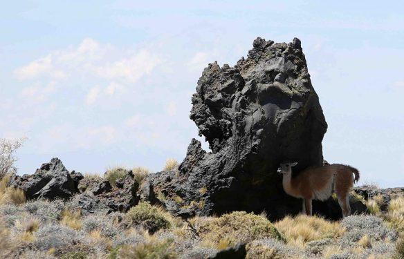 mendoza deserto nero argentina pampas negras