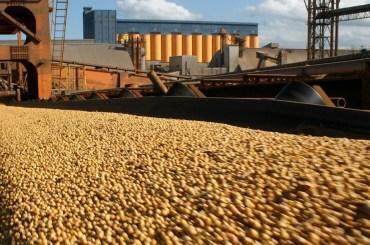 soia argentina produzione export previsioni 2020