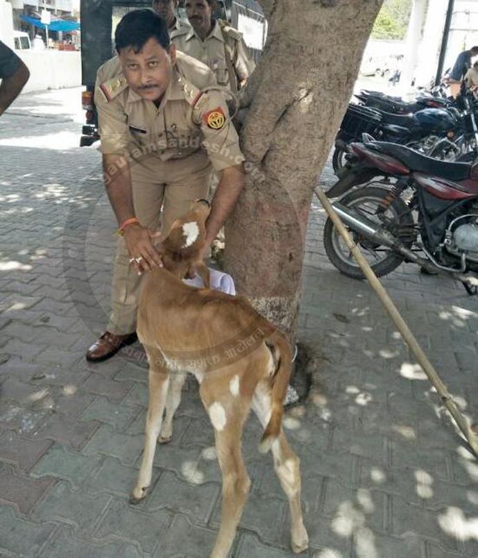 गाय की हत्या, कुछ महीने की बछिया काटने से पहले पहुंची पुलिस, दरिंदे गिरफ्तार