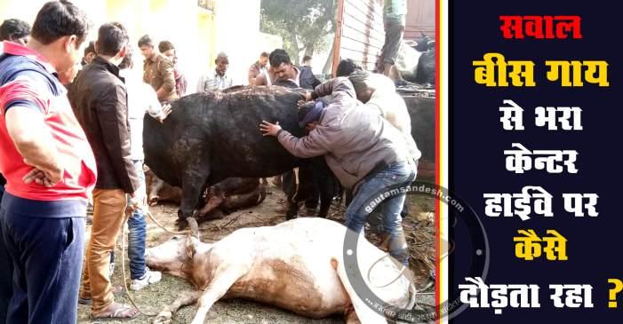तस्करी का खुलासा, दो गाय की मौत, दोषियों पर नहीं हुई कार्रवाई