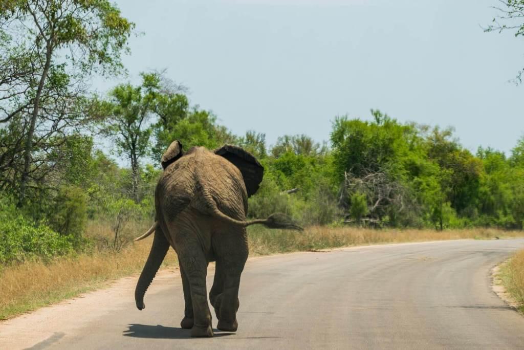 Life Coaching - Elephant walking down tarred road